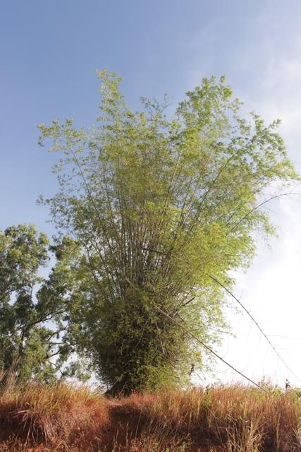 Nama Aua Sarumpun diambil karena di puncak bukit ini terdapat serumpun pohon bambu