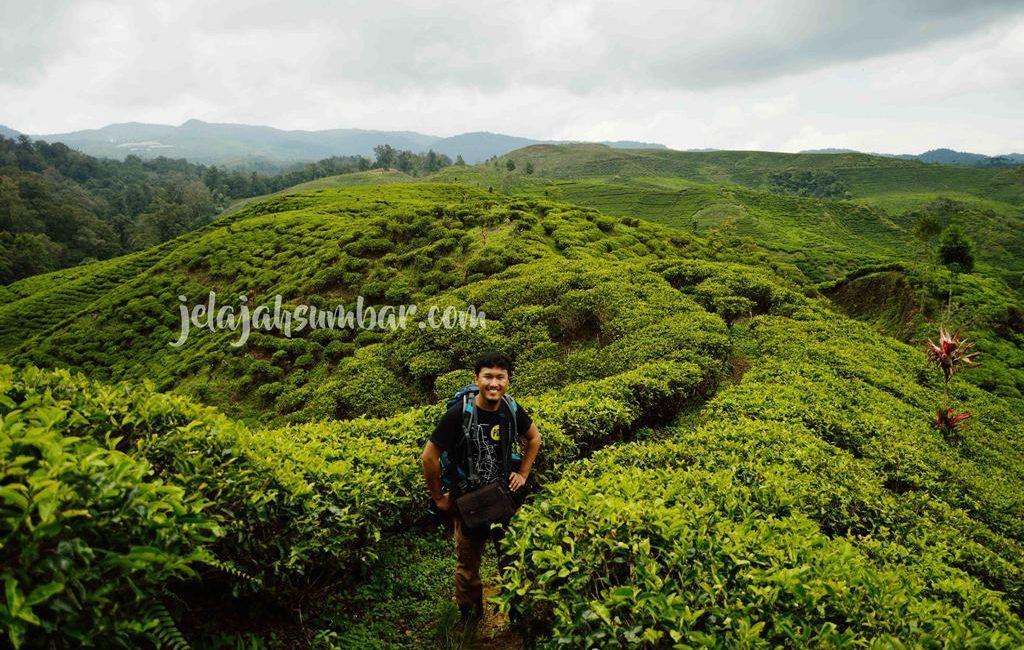 Perkebunan Teh Nirmala, Sebuah Enklave di Taman Nasional Gunung Halimun Salak